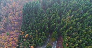 Forward aerial top view over car travelling on road in colorful autumn forest.Fall orange,green,yellow red tree woods. Mountains street path establisher.4k stock footage
