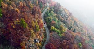 Forward aerial top view over car travelling on road in colorful autumn forest. Fall orange,green,yellow red tree woods. Forward aerial top view over car stock video