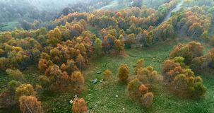 Forward aerial top view over colorful autumn birch forest in foggy weather.Fall orange,green,yellow red tree woods. Forward aerial top view over colorful autumn stock video