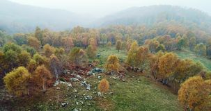 Forward aerial top view over colorful autumn birch forest with road in foggy weather.Fall orange,green,yellow red tree. Woods.Mountain fog establisher.4k drone stock video