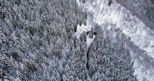 Forward aerial top view over hairpin bend turn road in mountain snow covered winter forest.White pine tree woods.Snowy. Street path establisher.4k drone flight stock footage