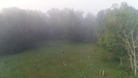 Forward Aerial Foggy View Above Historic Cemetery. 9179 A forward high angle aerial above a historic cemetery in the foggy woods stock footage