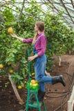 Forwardness van de oogst dit jaar stock fotografie