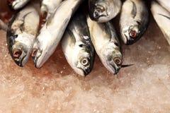 Forzen mackerel. In market rural Thailand Stock Image