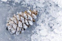 Forzen pine cone Royalty Free Stock Photos