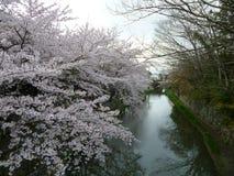 Fosa de Omihachiman en la primavera, Sakura Full Bloom Imagen de archivo