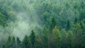 Foschia che aumenta lentamente nella foresta video d archivio
