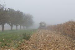 Foschia del campo di mais e giorno piovoso fotografie stock