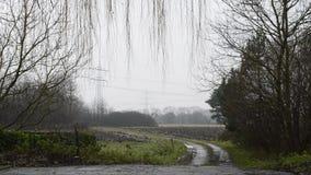 Foschia del campo di mais e giorno piovoso archivi video