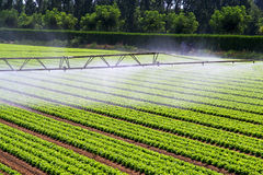 Foschia dell'acqua di irrigazione Fotografie Stock Libere da Diritti