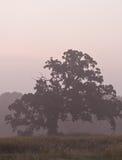 Foschia dell'albero di mattina immagini stock