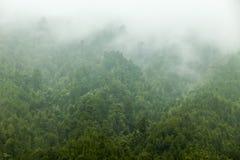 Foschia della foresta Immagini Stock