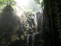Foschia della foresta pluviale Fotografie Stock