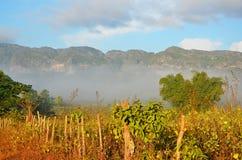 Foschia della valle di Vinales di mattina, Cuba Fotografia Stock Libera da Diritti