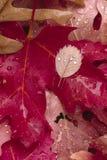 Foschia di autunno Immagine Stock Libera da Diritti