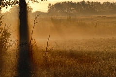 Foschia di mattina fotografie stock