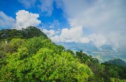 Foschia di mattina alla foresta pluviale tropicale Fotografia Stock