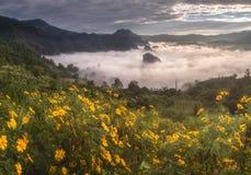 Foschia di mattina con la provincia di Payao di strato della montagna, Tailandia Immagini Stock Libere da Diritti