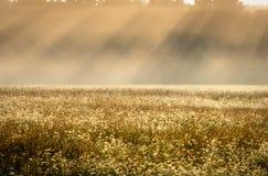 Foschia di mattina nei pastelli del campo con i raggi di sole inclinati immagini stock
