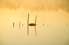 Foschia di mattina sopra il lago Fotografia Stock