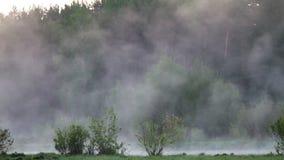 Foschia di mattina sopra l'acqua video d archivio