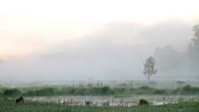 Foschia di mattina sopra l'acqua stock footage