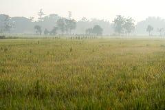 Foschia di mattina sopra le risaie Fotografia Stock Libera da Diritti