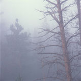 Foschia di primo mattino, Rocky Mountain National Park, Colorado Fotografia Stock Libera da Diritti