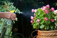 Foschia di spruzzatura sui fiori Fotografia Stock