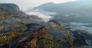 Foschia dinamica sopra i campi del terrazzo del riso stock footage