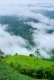 Foschia e montagne a Phu Tubberk Fotografia Stock