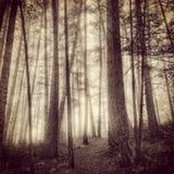 Foschia in foresta Fotografie Stock Libere da Diritti