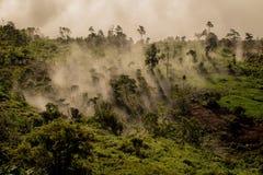 Foschia in foresta immagine stock