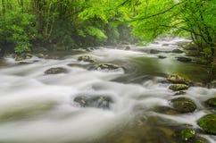 Foschia media del forcone, Great Smoky Mountains Fotografia Stock Libera da Diritti