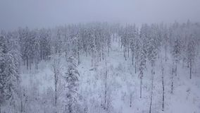 Foschia nebbiosa sopra il legno nevoso bianco stock footage