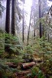 Foschia negli alberi fotografia stock libera da diritti