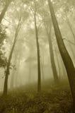 Foschia nella foresta Immagini Stock Libere da Diritti