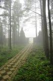 Foschia nella foresta Immagine Stock