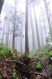 Foschia nella foresta Fotografia Stock Libera da Diritti