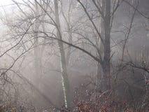 Foschia nella foresta Immagine Stock Libera da Diritti