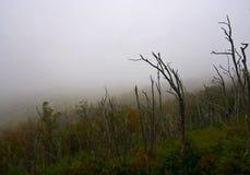 Foschia nella montagna fotografie stock