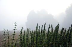 Foschia scura di primo mattino sul campo dell'azienda agricola Fotografie Stock Libere da Diritti