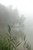 Foschia su un lago Immagine Stock Libera da Diritti