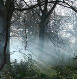 Foschia in terreni boscosi Immagini Stock Libere da Diritti