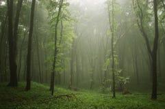 Foschia in una foresta verde fotografia stock