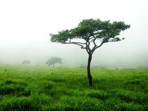 Foschia verde Fotografia Stock Libera da Diritti