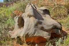 Fosilícese. Foto de archivo