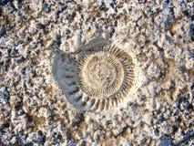 Fosil de ammonite Lizenzfreie Stockfotografie