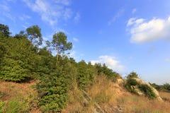 Fossé de drainage sur le dessus de la montagne dapingshan Image stock