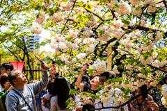 Fossé et fleurs de cerisier de Kyoto images libres de droits